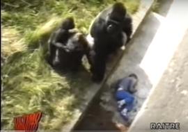 Un Bambino nella gabbia del Gorilla
