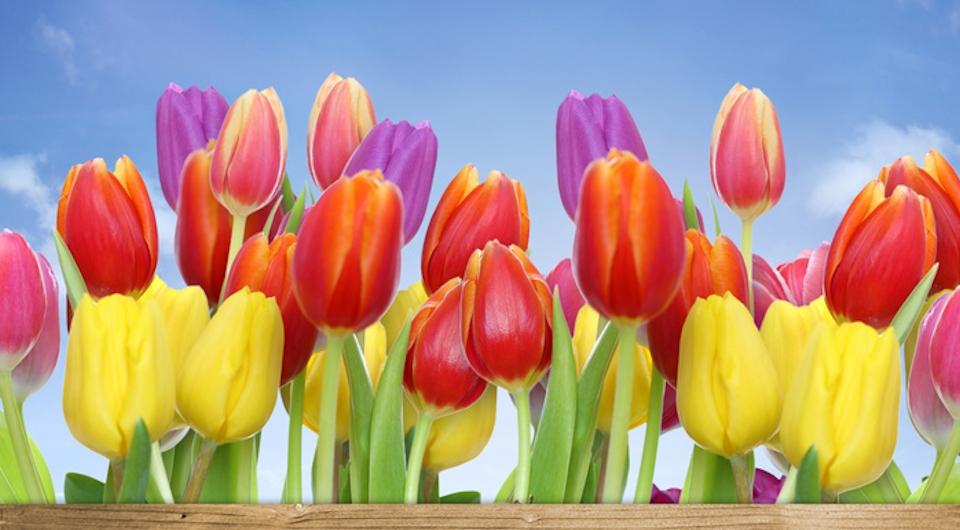 Quale fiore sei tu?