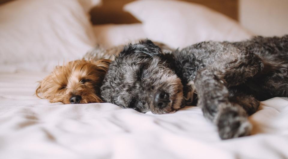 Quale razza di cane è adatta a te in base al tuo stile di vita?